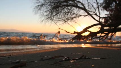 sea sunset tree