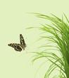 papillon sur brins d'herbe