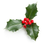 Fototapety Holly leaves and berries