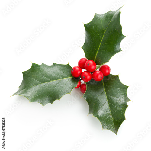 Deurstickers Bomen Holly leaves and berries