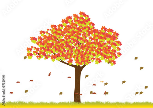 Maple tree in autumn season