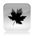 Leaf Autumn Icon