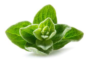 Oregano macro. Leaves on white background