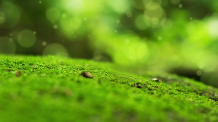 Moss with animated Bokeh Dot Background