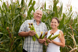 man and woman with corn ears
