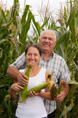 mature  man and woman in  corn field