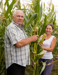 couple picking corn ears.