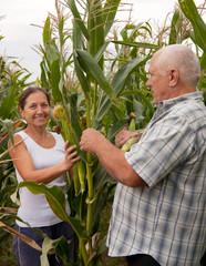 Mature couple  picking corn.