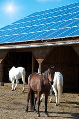 Solaranlage auf Pferdestall