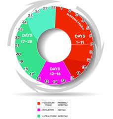 Menstrual cycle- Follicular Ovulation luteal Bleeding days