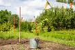 Сельскохозяйственные работы на приусадебном участке
