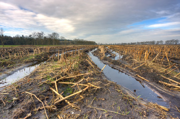 Muddy maize field