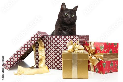 Katze als Weihnachtsgeschenk