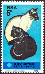 Black and Siamese Cats (South Africa 1972)