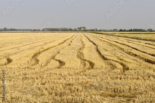 Rice field, Lomellina (North Italy)