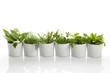 Leinwanddruck Bild - Herbs
