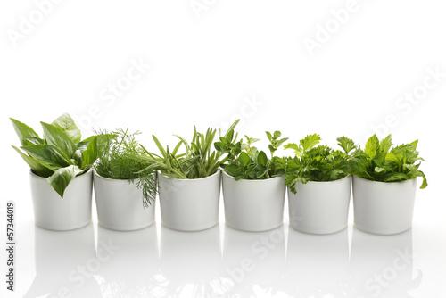 Leinwanddruck Bild Herbs