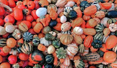 Zierkürbisse - decorative  gourds
