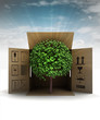 green piece of nature product delivery with sky flare