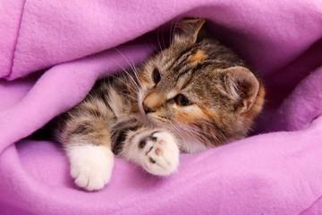 Katzenbaby mit Decke