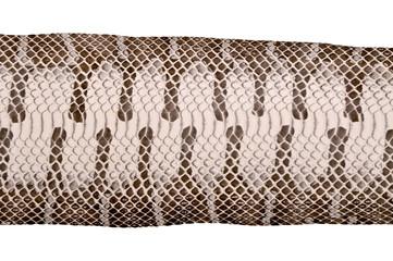 Water snake skin