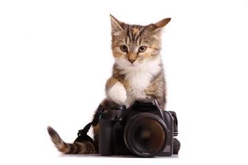 junge Katze mit Kamera