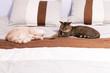 Cat Friends in Bedroom