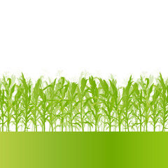 Corn field detailed countryside landscape ecology illustration b