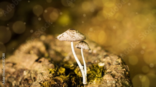 Wild mushroom with animated bokeh background