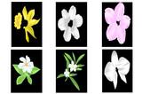 all kinds of flowers beauty