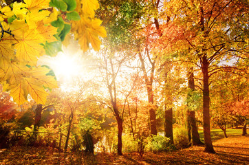 Wonderful day in autumn