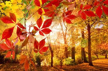 Herbst: Park mit bunten, fallenden Blättern