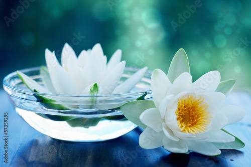 Foto op Canvas Lotusbloem white lotus flower