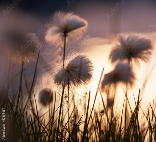 Polar flowers - 57359437
