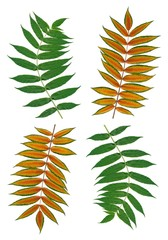 sumac leaves as background
