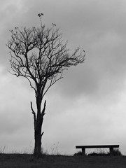 Tree and bench in BW