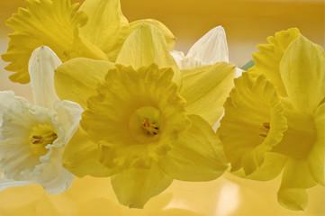weiße und gelbe Narzissen
