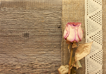 Dry rose  on the wooden background