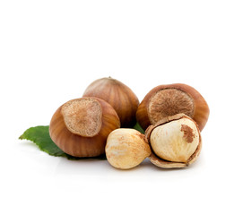 Group of hazelnut