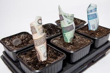 Rosnący zysk