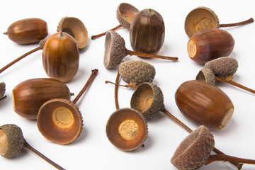 Many acorns and shells