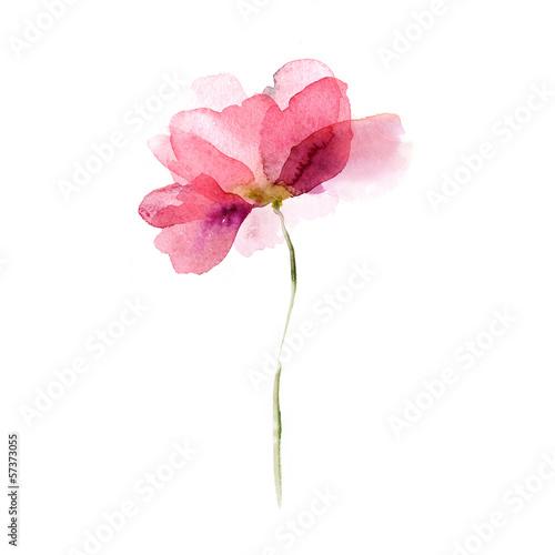Fototapeta Watercolor flower