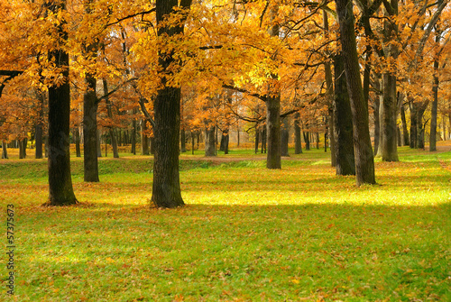 Autumn landscape in the park