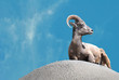 Ram on the Rock with a Blue Sky