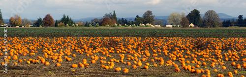 Leinwandbild Motiv Panoramic Scene Farm Field Pumpkin Patch Vegetables Ripe Harvest