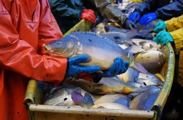 Abfischen - to fish dry 08