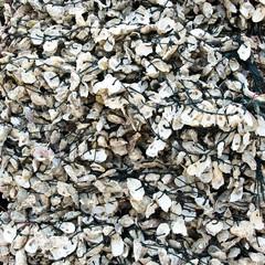Wall of seashells