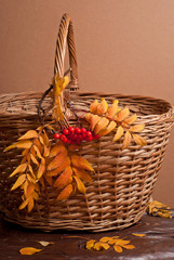 Autumn rowanberry and basket