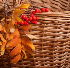 Autumn rowanberry background