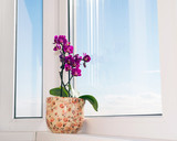 Pink orchid on a windowsill